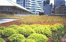 green-roof-system-toronto.jpg