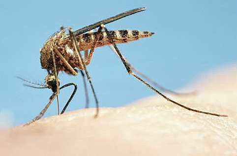 kill mosquitoes naturally greenstrides sustainable landscape